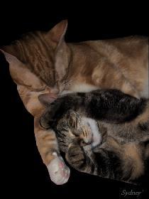 Schmusende Katzen - Diger & Poki