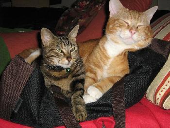 Sie teilen sich sogar meine Handtasche :)