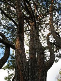 Einfach ein schöner Baum..... auf dem Südfriedhof