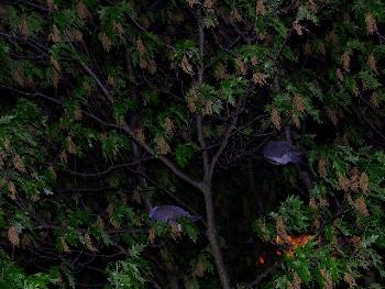 Draussen in stürmischer dunkler Nacht schlafen 2 Vögel und wachen übereinander