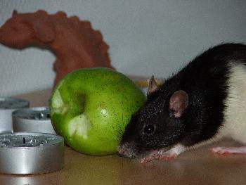 Broscha posiert mit Apfel (und kann ihre Zähne davon nicht lassen)