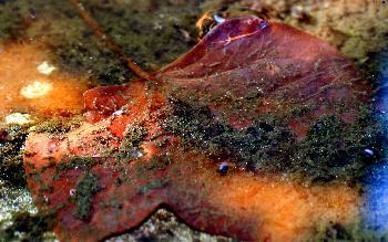 artos: Nur ein Blatt im Wasser