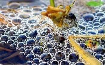 artos: Wasserwelt