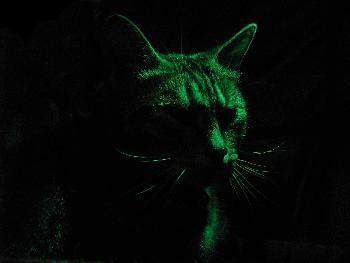 In der Nacht sind alle Katzen grau?