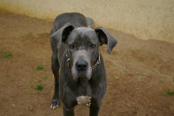 Die Kira auch ein Süsser Hund