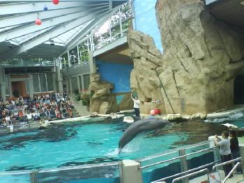 wistful: Delfinshow