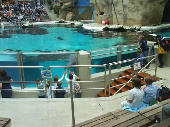 wistful: noch mehr Delfinshow