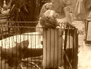 Leon & Leo (Sepia)
