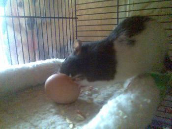 Leon & das Ei