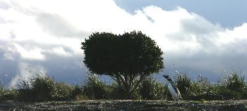 sanaoria: Pinguin unterm Baum