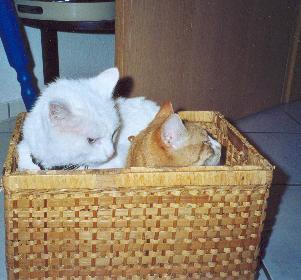 Kampf um den Platz im Korb ...Jimmy und Kitty