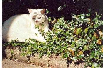 Jimmy nimmt ein Sonnenbad