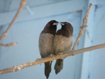 Zwei Vögel - die wahre Liebe