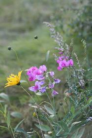 Blumen am Bach (1)
