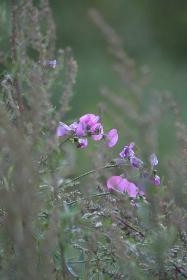 Blumen am Bach (3)