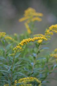 Blumen am Bach (4)