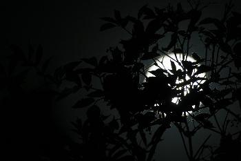 Blätter im Mondschein