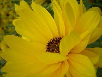 Kräftiges Gelb ...