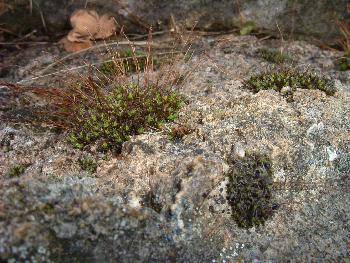 Auch Steine leben ...