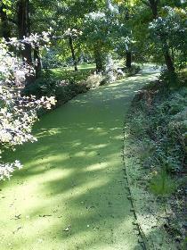 Blühende Wasserstr. im Schloßpark