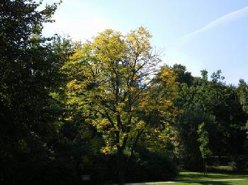 `s wird Herbst