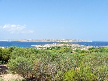 Grüne Wälder auf Malta?