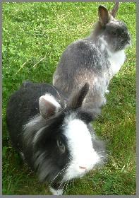 Unsere dicken Kaninchen beim Freigang ..
