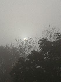 sun vs fog..