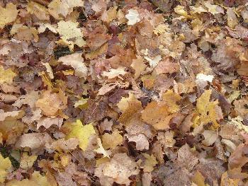 Der Herbst hat uns erreicht..