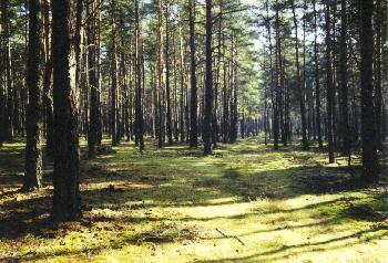 Beelitzer Pilzwald