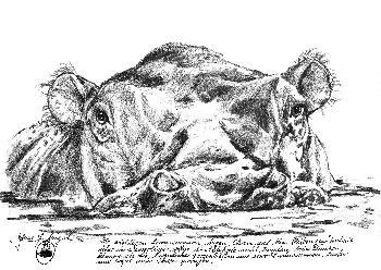 Nilpferd-Portrait