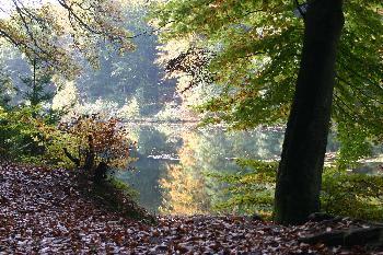 zappo: Baum vor einem See