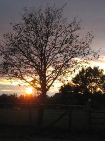 Sonnenuntergang im Herbst I