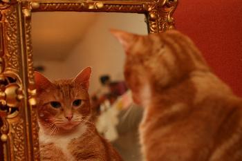 Vor dem Spiegel - der Digge