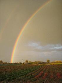 Regenbogen über dem Erdbeerfeld (links)