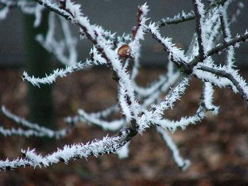 Stachelige Zweige
