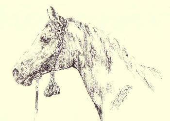 Pferdeportrait 02