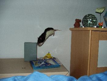 Broscha: Flying Rat