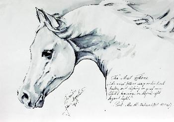 Arab Horse 03