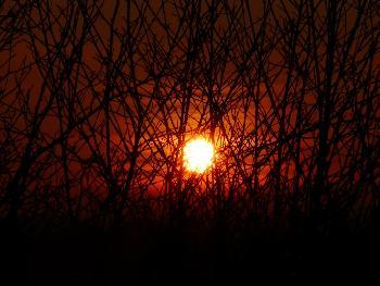 Prickly sun ...