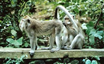 Putztag der Affen