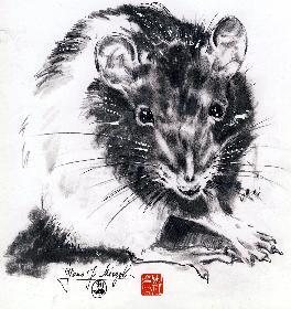 Broscha No 3 im chinesischen Jahr der Ratte