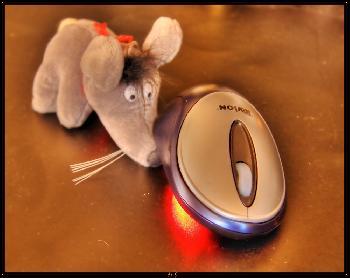 Maus sucht Maus in HDR TM