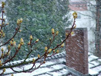 Seltenes Schauspiel - Schneetreiben im April