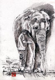Tierpark Hellabrun Abschied von Kathy 01