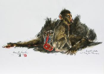 Mandrillmutter aus dem Leipziger Zoo