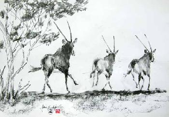 Das wilde Afrika 04