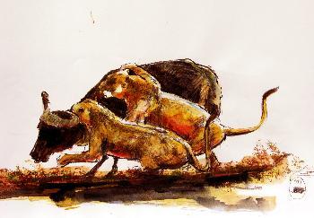 Das wilde Afrika 11