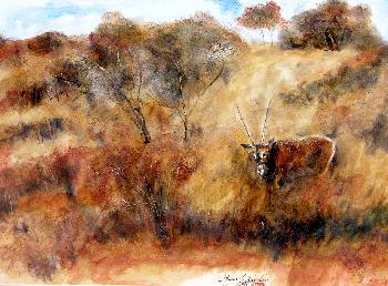 Das wilde Afrika 13 Oryx