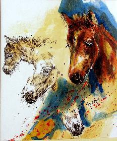 shedland pony